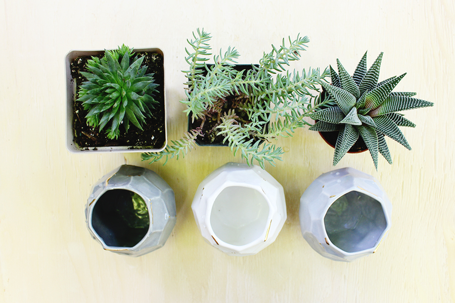 Style Bee - Succulent Survival Guide